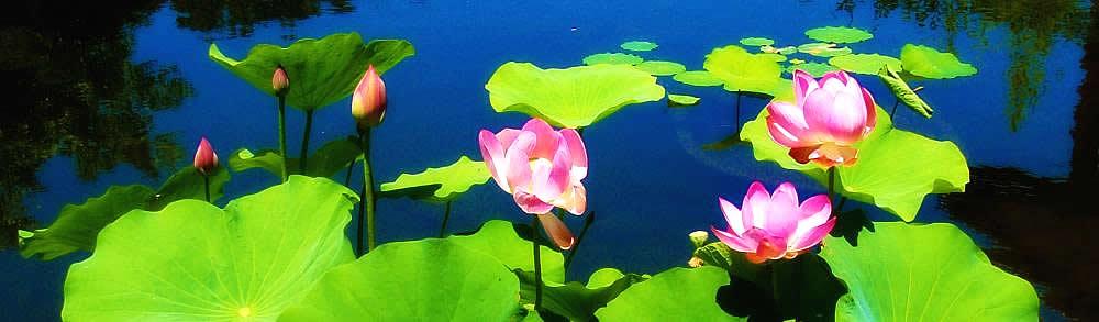 City Of 10000 Buddhas The Wonderful Dharma Lotus Flower Sutra 1